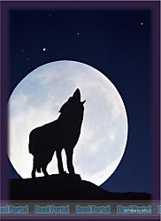 ブロッコリーハイブリッドスリーブ 「月下の孤影」 リバイバル