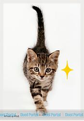 ブロッコリーキャラクタースリーブ・ミニ 猫「キラリ」