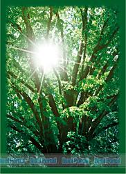 ブロッコリーハイブリッドスリーブ「木漏日の森」