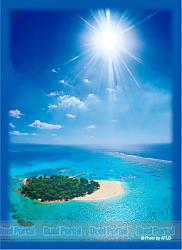 ブロッコリーハイブリッドスリーブ「風の憩う島」