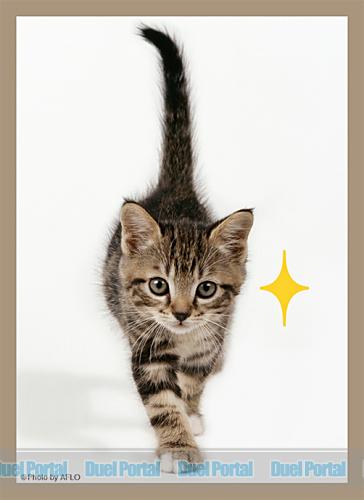 ブロッコリーハイブリッドスリーブ 猫「キラリ」